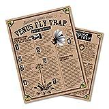 Venus Fly Trap | Carnivorous Plant Grow Kit | The