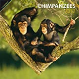 Chimpanzees 2012 Square 12X12 Wall Calendar