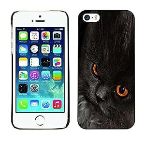 YiPhone /// Prima de resorte delgada de la cubierta del caso de Shell Armor - Nebelung Cat Black Eyes Chartreux - Apple iPhone 5 / 5S
