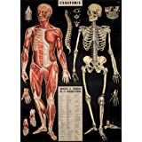 "Cavallini Decorative Paper - L'Anatomie 20""x28"" Sheet"