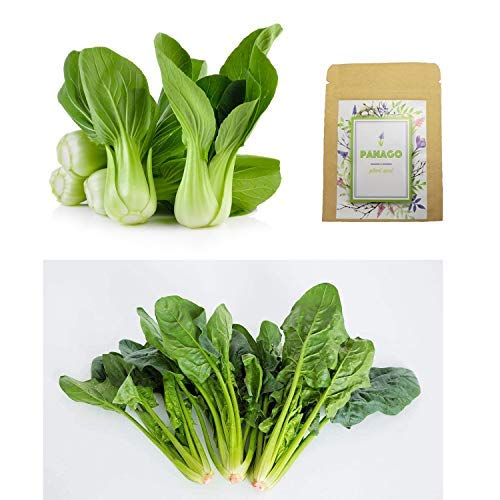 1000+ Baby Bok Choy Seeds & 500+ Spinach Seeds for Planting, Non-GMO Organic Heirloom Green Vegetable Seeds