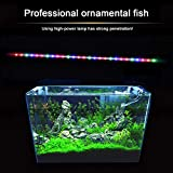 Acuario Pecera Luz LED Uso Anfibio Blanco Azul/Rojo Azul Verde Color de luz Sumergible Impermeable Clip Lámpara US 220V