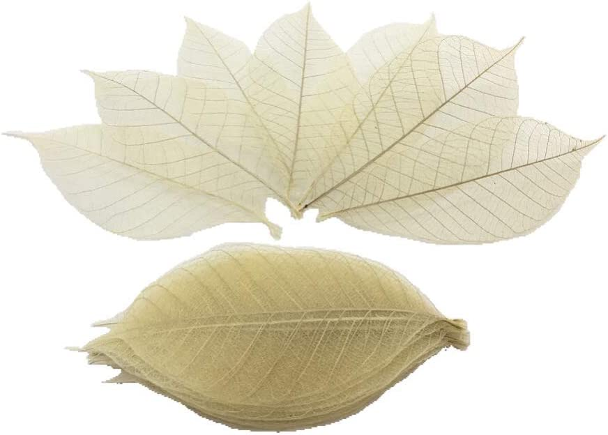 100 Nature brown color, No paint. Skeleton Leaves Rubber Tree Natural Scrapbooking Craft DIY Card Wedding.