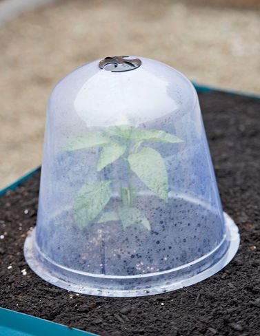 Large Garden Cloches, Set of 3