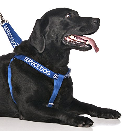 Service Dog Blue Color Coded Alert Warning L XL Non Pull Dog Harness Prevents Accidents By Warning Others of Your Dog in - Coded Floor