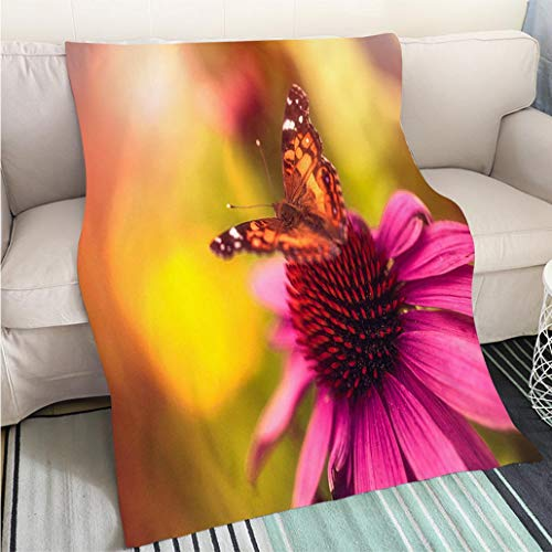 BEICICI Comforter Multicolor Bed or Couch Beautiful echinacea coneflower with Butterfly and Bokeh Hypoallergenic - Plush Microfiber Fill - Machine Washable
