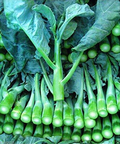 Seeds Rice (Chinese Broccoli-1000 Seeds, Kai Lan, Gai Lan, Brassica Alboglabra, Open Pollinated)