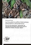 Le Gravelot À Collier Interrompu, Kouidri Mohammed, 3841625576