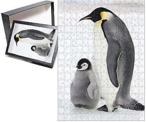 Baby Emperor Penguin Chick - 4