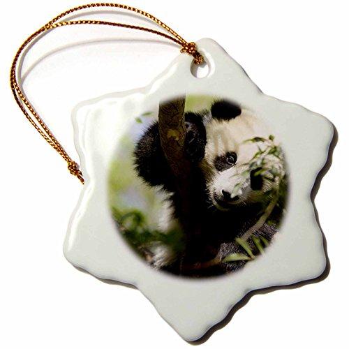 3dRose orn_88551_1 Giant Panda Bear, Research Station, San Diego Zoo CA US05 MPR0038 Maresa Pryor Snowflake Porcelain Ornament, 3-Inch ()