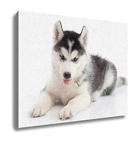 Amazon Com Ashley Canvas Siberian Husky Puppy Lying On White Yale