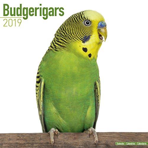 Budgerigars Calendar - Parakeet Calendars -2018 Wall calendars - Calendars 2018 - 2019 Wall Calendars - Bird Calendars - Monthly Wall Calendar by Avonside