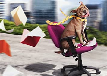 funny office chairs. dog / office chair fun - avanti funny retirement card chairs