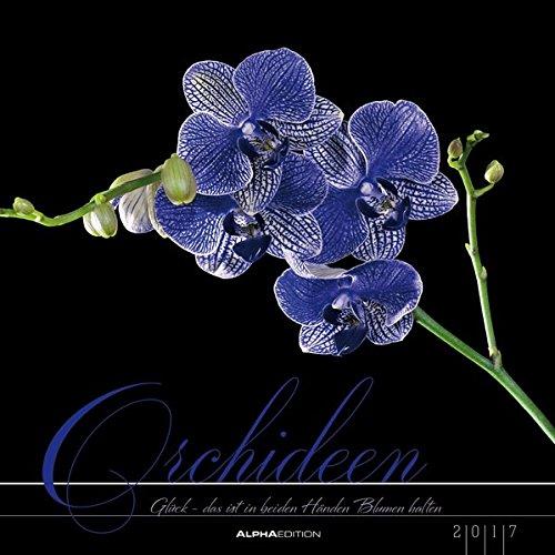 Orchideen 2017 - Blumen - Bildkalender (33 x 33) - mit Texten