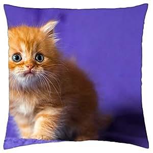 kitten purple ginger orange cat cute animal - Throw Pillow Cover Case (18