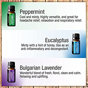 Pure Body Naturals Essential Oils Top 6 Sample Set for Aromatherapy - Lavender, Tea Tree, Eucalyptus, Lemongrass, Orange, Peppermint - 10 Milliliter (6 Count)