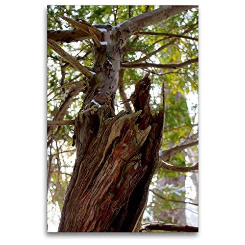 CALVENDO Nature Toile en Textile de qualité supérieure 80 x 120 cm Motif forêt d'Eibenwald
