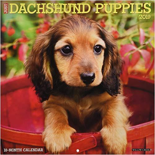 Just Dachshund Puppies 2019 Wall Calendar (Dog Breed Calendar)