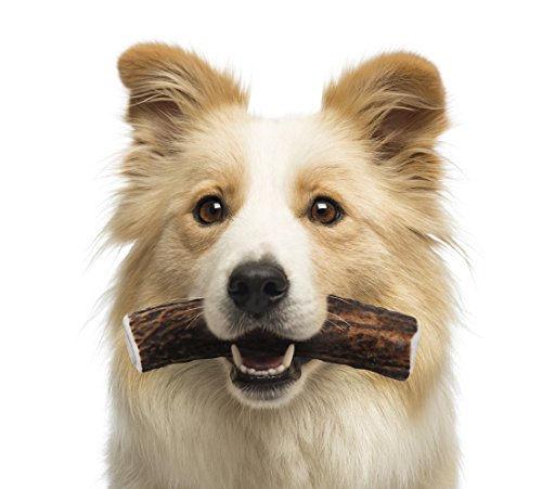 Elk-Antler-Dog-Chews-by-Buck-Bone-Organics-All-Natural-Healthy-Chew-For-Medium-Dogs-From-Montana-Made-in-the-USA-MEDIUM-SIZE