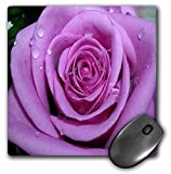 3dRose LLC 8 x 8 x 0.25 Inches Mouse Pad, Purple Rose (mp_1264_1)