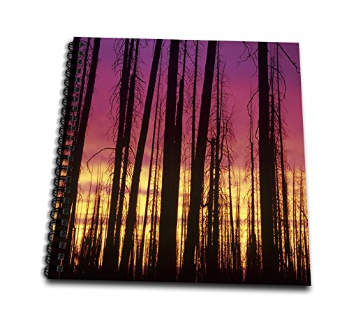 8 Inch Pine Trees - 3dRose Danita Delimont - trees - Orecon, Hells Canyon NRA, Hat Point, Lodgepole pines at sunset - Drawing Book 8 x 8 inch (db_259898_1)