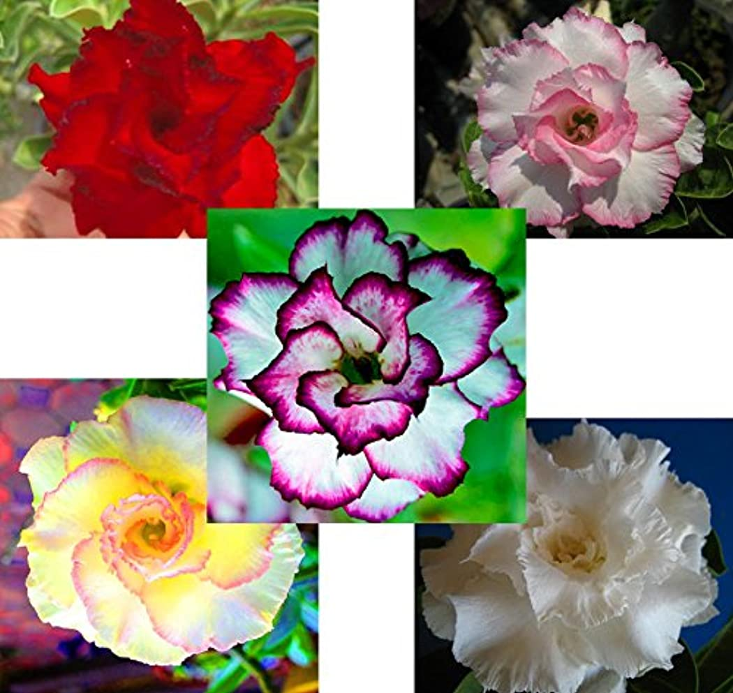 精通したこどもの日助けてYobansa 造花 フレグランス ソープフラワー プレゼント 花束 石鹸 薔薇 枯れない 花 バラ ブーケ プレゼント 結婚祝い 誕生日 母の日 父の日 定年祝い 還暦祝い 新築祝い 送別会 メッセージカード付き