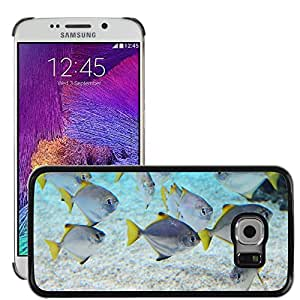 Hot Style Cell Phone PC Hard Case Cover // M00117473 Animal Animals Aquarium Blue Coral // Samsung Galaxy S6 EDGE (Not Fits S6)