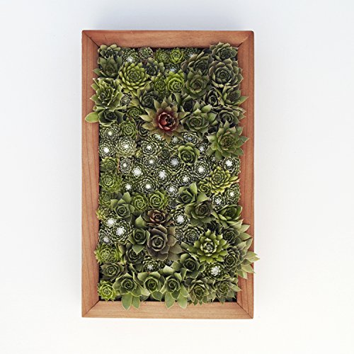 Succulent Gardens Medium Living Picture Planter DIY Kit, 6'' x 12'' Frame, Multicolor by Succulent Gardens (Image #5)