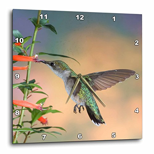 3dRose Ruby-Throated Hummingbird Female - Marion Co. Il - Wall Clock, 10 by 10-Inch ()