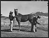 1943 Photo Moreno Valley, Colfax County, New Mexico. John Mutz changing a shoe on George Turner's prize Arabian pony Location: Colfax County, Moreno Valley, New Mexico