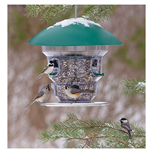 Feeding Frenzy Feeding Station - Wild Bill's Non-Electric Feeding Frenzy Bird Feeder