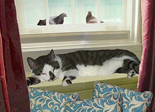 Cat Greeting Cards, Perfect Napping Place 5 X 7 (Folded) Blank, Handmade By Deborah Julian