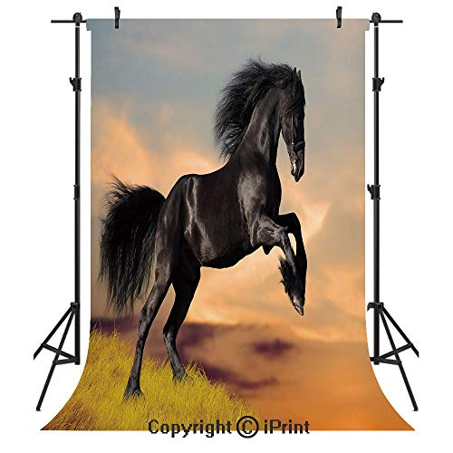 Horse Decor Photography Backdrops,Western Wildlife Theme Friesian Horse Galloping Idyllic Sunset Scenery Pasture Decorative,Birthday Party Seamless Photo Studio Booth Background Banner 5x7ft,Multicolo