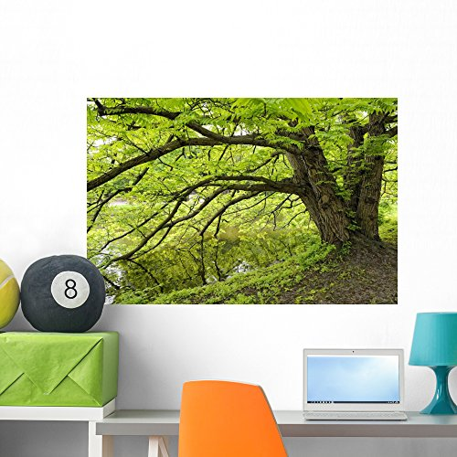 Wallmonkeys Tree Growing over Pond Wall Decal Peel and Stick Graphic WM200922 (36 in W x 24 in H) ()