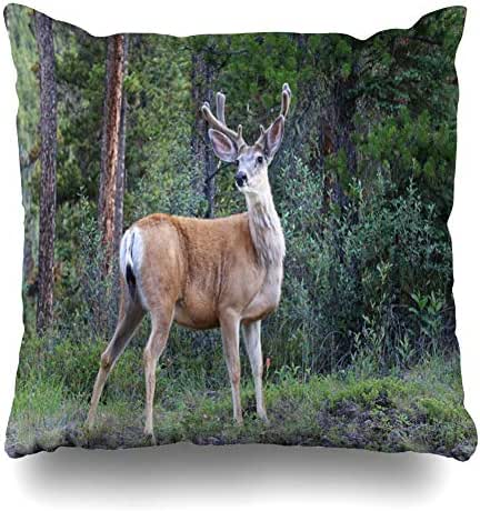 Kutita Decorative Pillow Covers 16 x 16 inch Throw Pillow Covers, Canadian Rockies Wild Animals · Deer · Elk · American Red Deer Pattern Double-Sided Decorative Home Decor Pillowcase