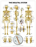 The Skeletal System Wall Chart - Peel and Stick, Shop Anatomical and Jones, Nicole M., 1942605056