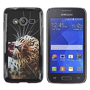 Be Good Phone Accessory // Dura Cáscara cubierta Protectora Caso Carcasa Funda de Protección para Samsung Galaxy Ace 4 G313 SM-G313F // Puma Big Cat Savannah Nature Animal Africa