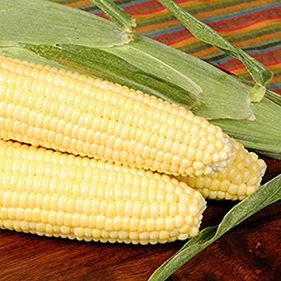 Bodacious R/M Hybrid Corn Garden Seeds (Treated) - Non-GMO, SE (Sugary Enhanced) Vegetable Gardening Seeds
