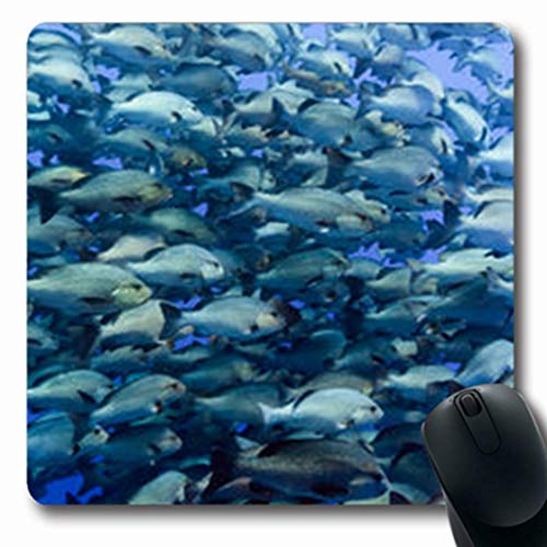 (Pandarllin Mousepads Undersea Large Shoal Snapper Deep El Water Wildlife Fish Nature Salt Oblong Shape 7.9 x 9.5 Inches Oblong Gaming Mouse Pad Non-Slip Rubber Mat)