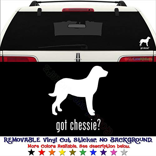 Got Chessie Chesapeake Bay Retriever Dog Pet PERMANENT Vinyl Decal Sticker For Laptop Tablet Helmet Windows Wall Decor Car Truck Motorcycle - Size (10 Inch / 25 Cm Tall) - Color (Gloss White)