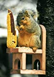 Squirrel Feeder Chair Review