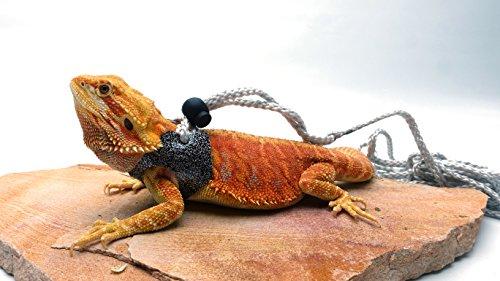 Ogle Lizard Leash, Limited Edition Sparkly Charcoal (medium size) ()