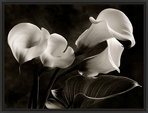 26in x 38in Calla Lilies No. 1 by Sondra Wampler - Black Floater Framed Canvas w/ (Sondra Wampler Calla Lilies)