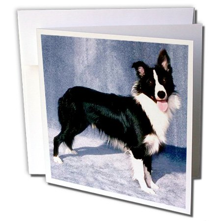 3dRose Border Collie - Greeting Cards, 6 x 6 inches, set of 12 (gc_1245_2) ()