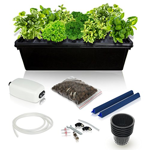 DWC Hydroponics Growing System Kit - 2 Large Airstone, 14 Plant Sites (holes) Bucket w/ Air Pump - Best Indoor Herb Garden for Cilantro, Mint - Complete Hydroponic Setup Grow Fast at Home by SavvyGrow