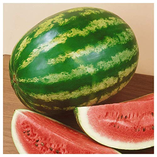 Crimson Sweet - Everwilde Farms - 1/4 Lb Organic Crimson Sweet Watermelon Seeds - Gold Vault
