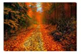 Warm Colors int the Woods Canvas Wall Art, 5 Stars Gift 31.5 X 47.2 Inch Startonight