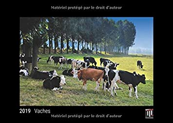 Vaches 2019 édition noire calendrier mural timokrates calendrier