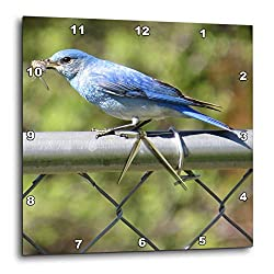 3dRose Jos Fauxtographee- Early Bird - The Early Bird Catches The Food a Blue Bird on a Fence with eats - 13x13 Wall Clock (DPP_291358_2)