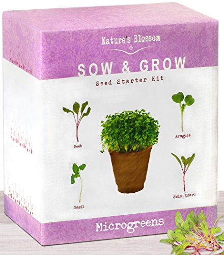 Alfalfa Grow Sprouts (The Beginner's Kit To Grow 4 Types Of Microgreen Sprouts From Seed. 10 Day Results. Plant an Organic Indoor Vegetable Garden With Ease. Sprouting Growing Set W/ Arugula Seeds, Basil, Beets & Chards)